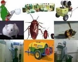 شركة مكافحة الحشرات بالطائف