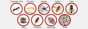 شركات مكافحة حشرات بالقطيف